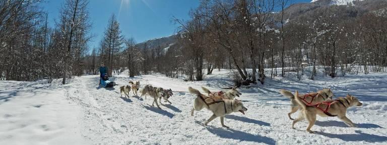 9gn_chiens-traineaux-pelvoux.jpg