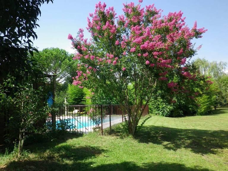 arbre-en-fleur.jpg
